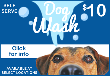 dog-wash2.fw.png